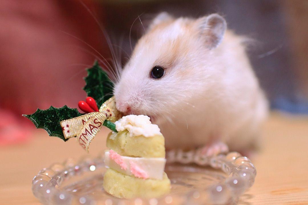 画像に含まれている可能性があるもの 食べ物 淡い色 豆腐 ケーキ ドミナント