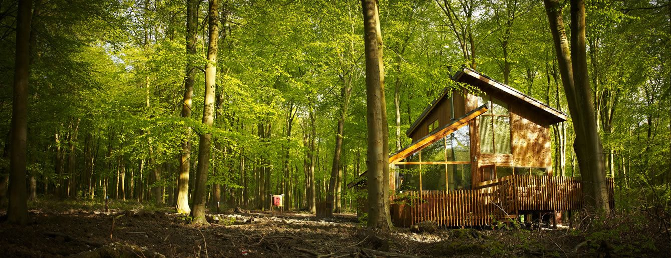 Log Cabin & Lodge Holidays Blackwood Forest, Hampshire