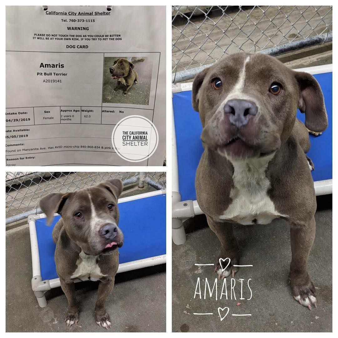 California City Animal Shelter On Instagram Amaris Was Left In The Drop Kennels 4 29 With No Note There Was A Posting On Fb Animal Shelter Animals Dog Cards