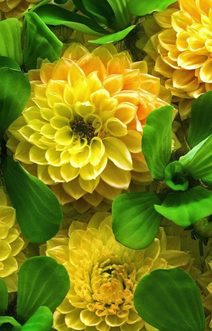 Pin by Amy Harmeier on Green & Yellow Amazing flowers