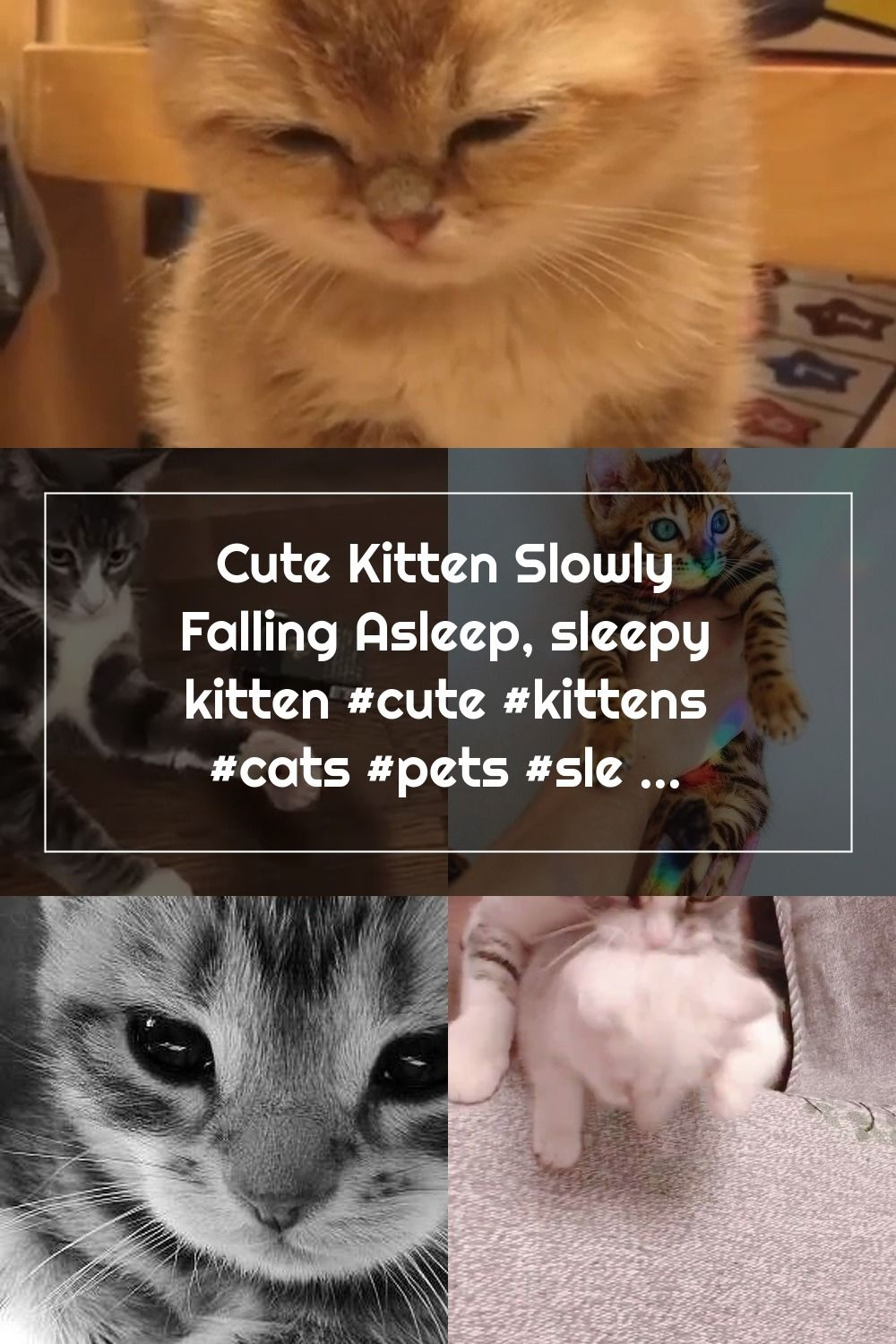 Cute Kitten Slowly Falling Asleep Sleepy Kitten Cute Kittens Cats Pets Sleeping In 2020 Sleepy Kitten Kittens Cutest Cats And Kittens
