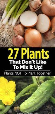 Incompatible Plants - Some Plants Grow Well Together And Some