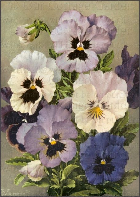 Bouquet Of Lavender Pansies Voerman Our Cottage Garden Pansies Flowers Flower Art Floral Painting