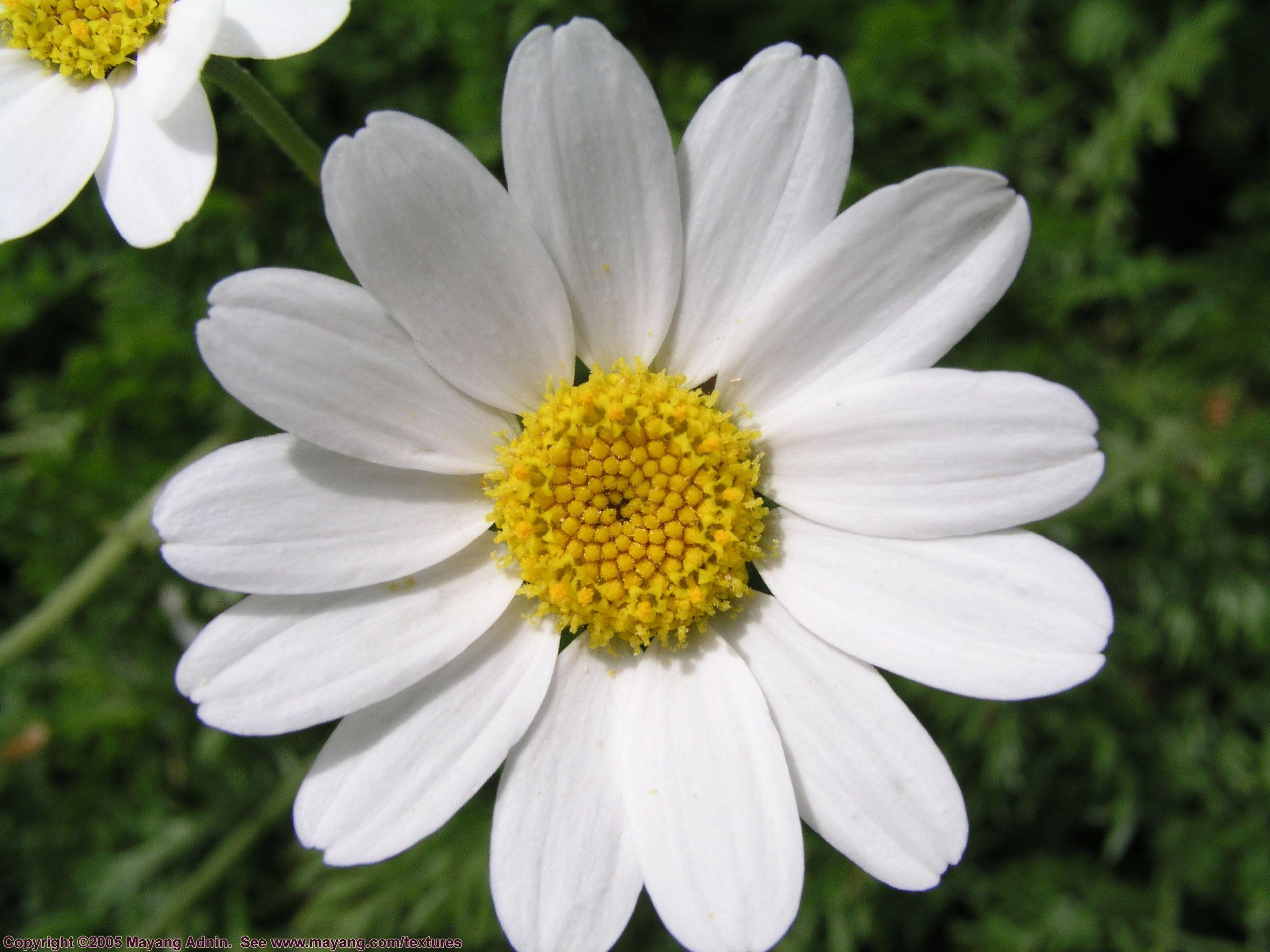 Daisylikeflower5140181g 25601920 flowers plants daisylikeflower5140181g 25601920 daisy izmirmasajfo Image collections