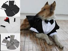 LARGE Dog tuxedo, black-tie affair, formal apparel, dressed up B&W, large breeds