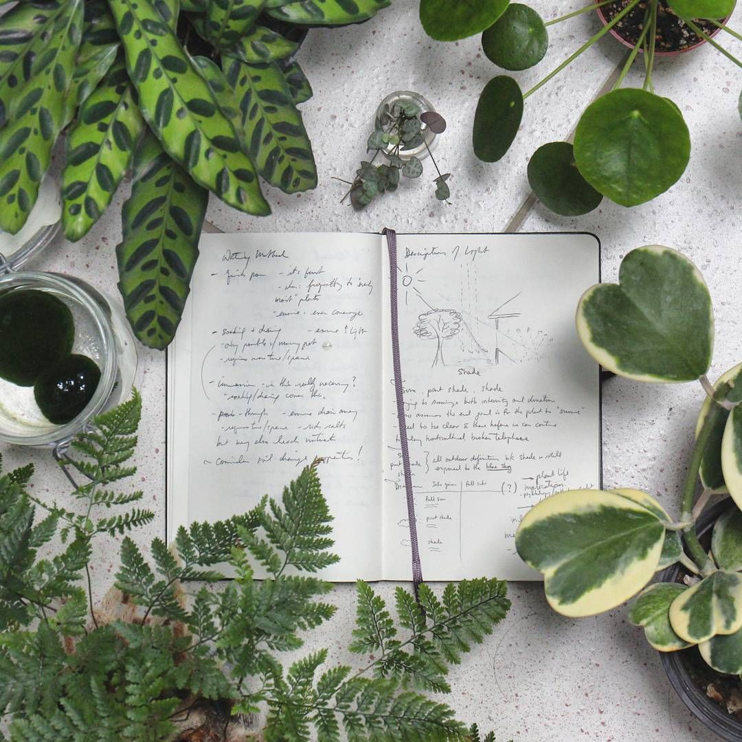 Nursery Indoor Plants Near Me: *The House Plant Journal Book*