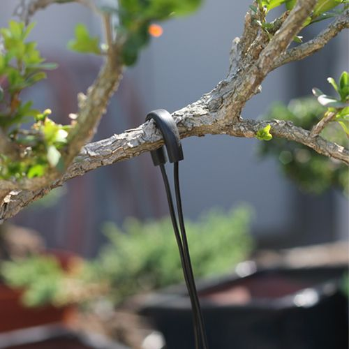 Stupendous Bonsai Guy Wires Are Great Alternative To Traditional Wiring For Wiring Cloud Mangdienstapotheekhoekschewaardnl