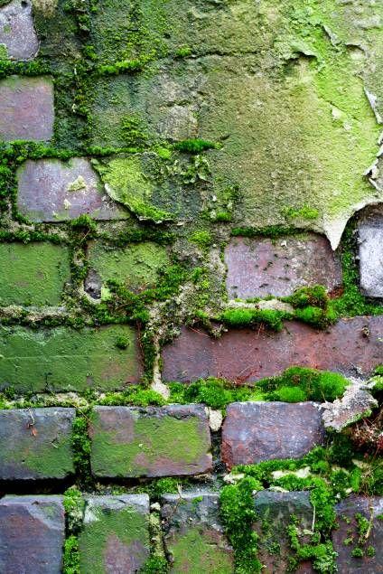 Green | Grün | Verde | Grøn | Groen | 緑 | Emerald | Colour | Texture | Style | Form | Pattern | mossy wall