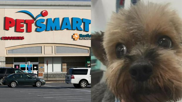 Investigation Finds 47 Dogs Died After Grooming At Petsmart Over Past Decade Dog Died Dog Boarding Dogs