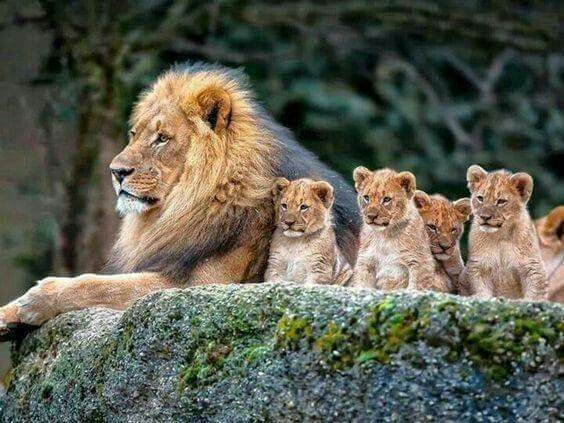 Pin By Robert Conway On Robertconway707 Gmail Com Animals Cute Animals Animals Beautiful