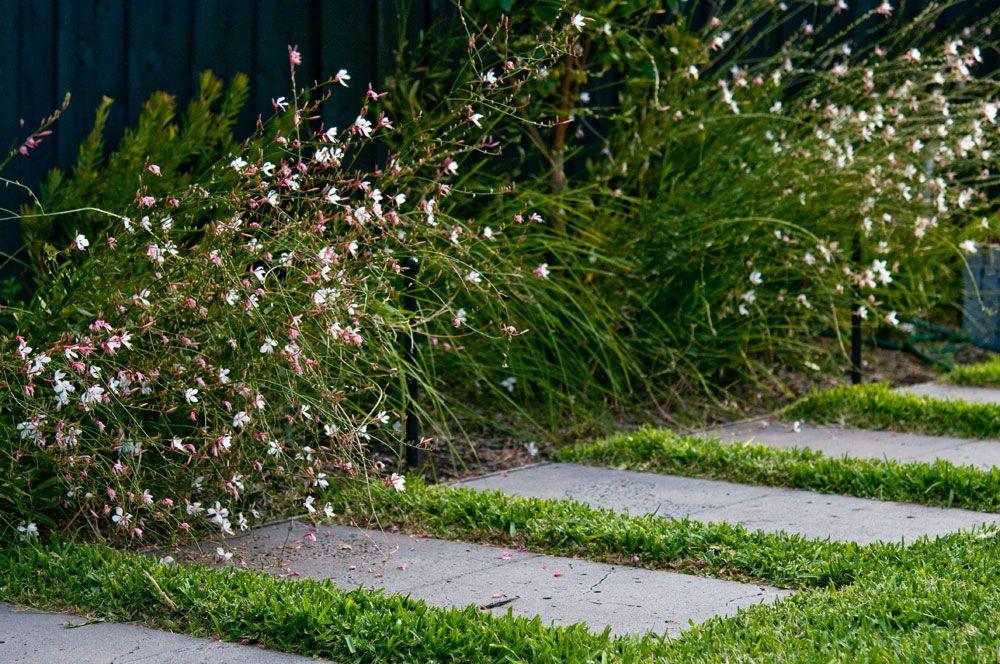 Elsternwick Garden dreams Pinterest - paisajes jardines