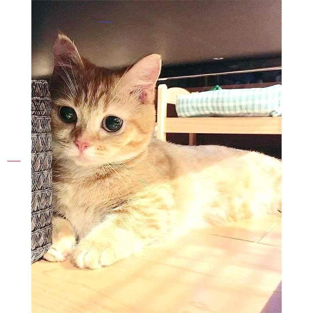 Bengalkittens In 2020 Bengal Kitten Bengal Cat Cat Aesthetic