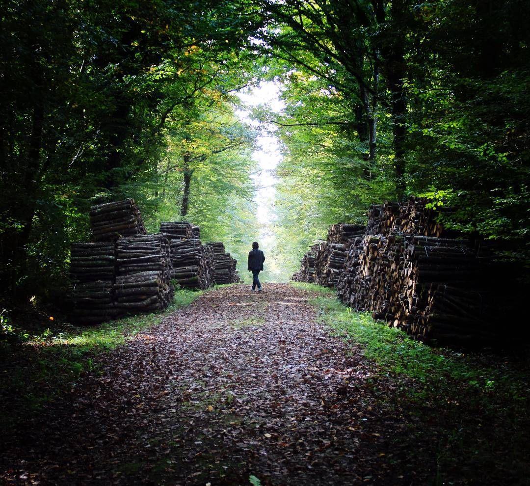 La Forêt Sur Sèvre France clair obscur en forêt de l'hermitage. avec @sol6379