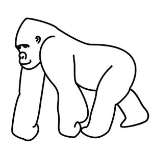 How To Draw A Gorilla Gorilla Illustration Gorillas Art Drawings