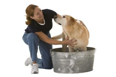 Dog Shampoo Recipe With Dawn And Vinegar Products I Love