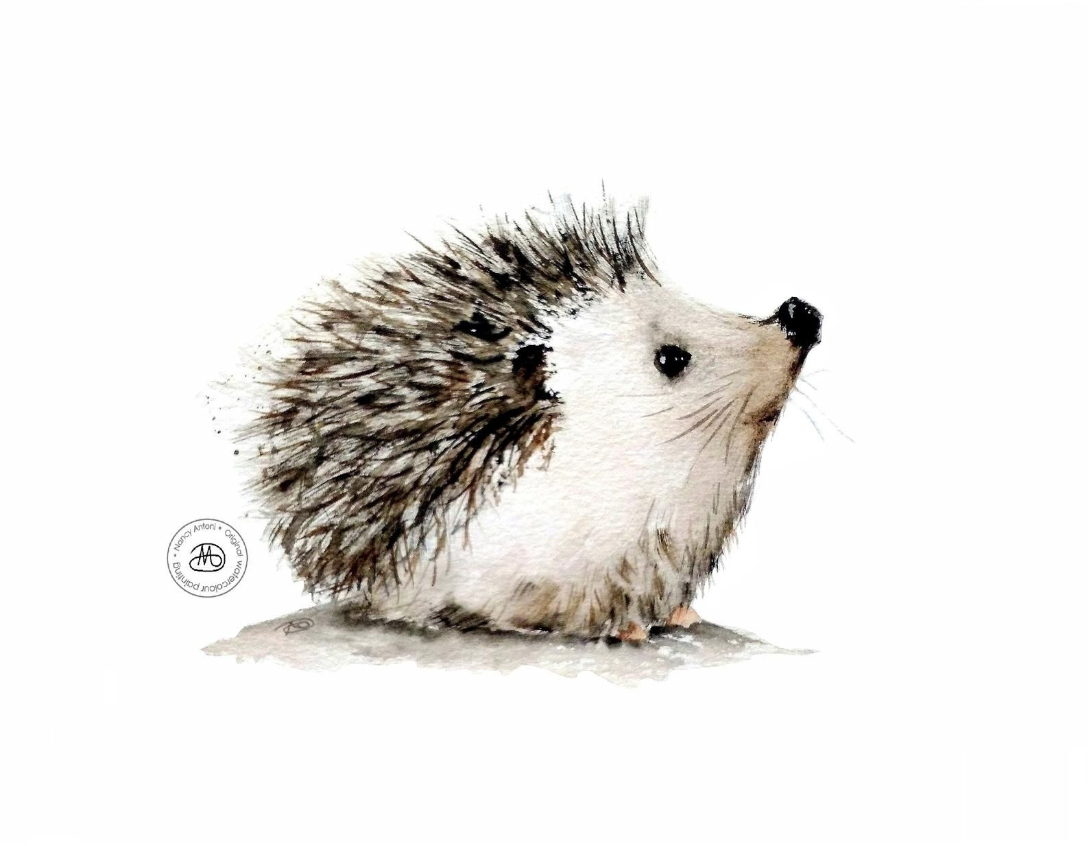 Little Hedgehog Print of my watercolour by Nancy A