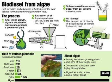 amazing diy methods to produce biofuel from algae algae biomass