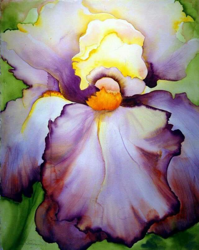 Iris In Yellow And Purple Watercolor Projects Watercolor