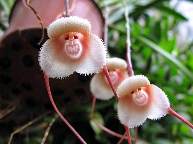 June 2014 Orchid Seeds Unusual Flowers Strange Flowers
