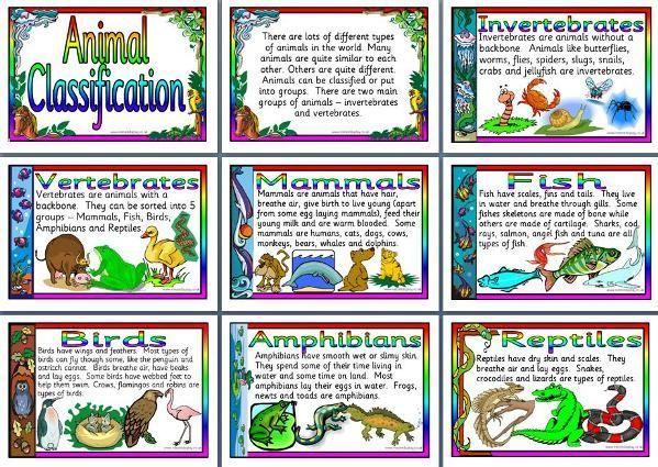 classifying animals - Buscar con Google | Life Science | Ks2