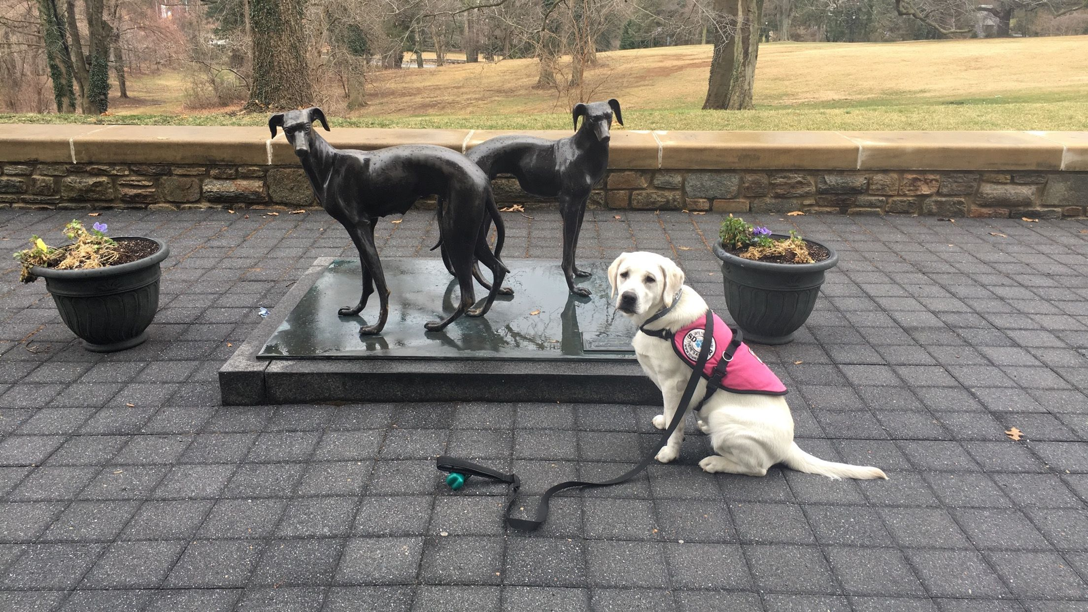 Loyola University Maryland S Ban On Service Dogs In Training