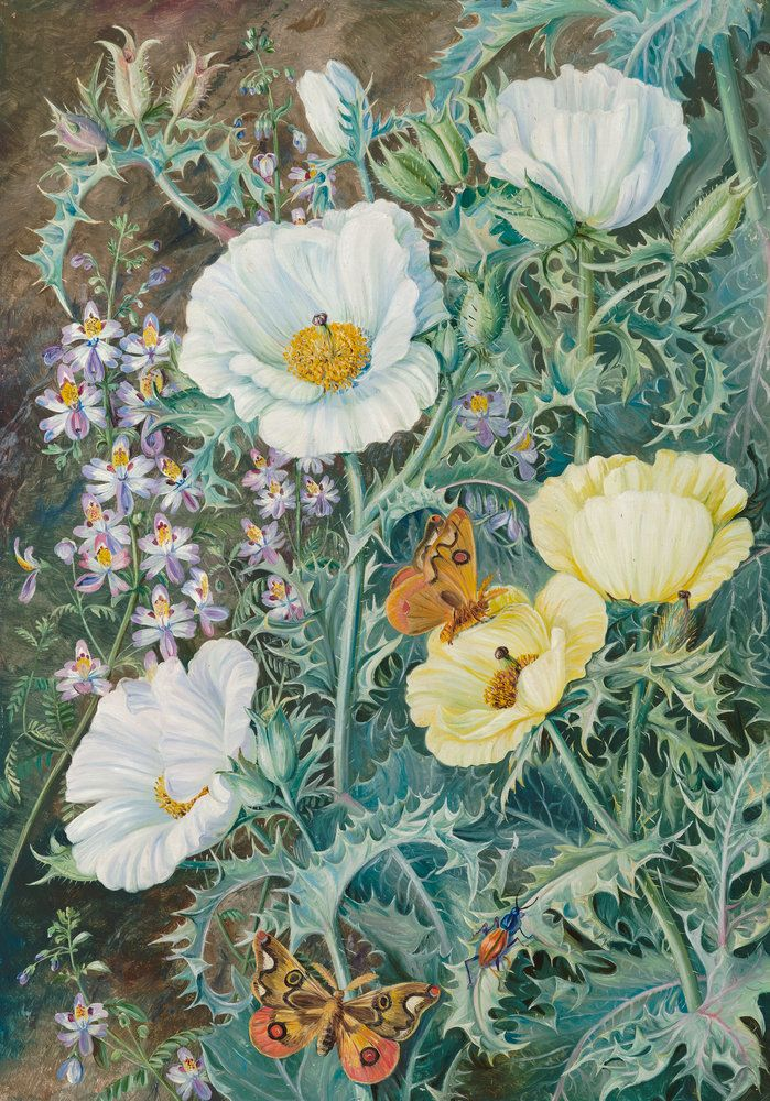 Marvelous Mexican Poppies, Chilian Schizanthus And Insects.   Marianne North   Kew  Gardens Botanical Prints
