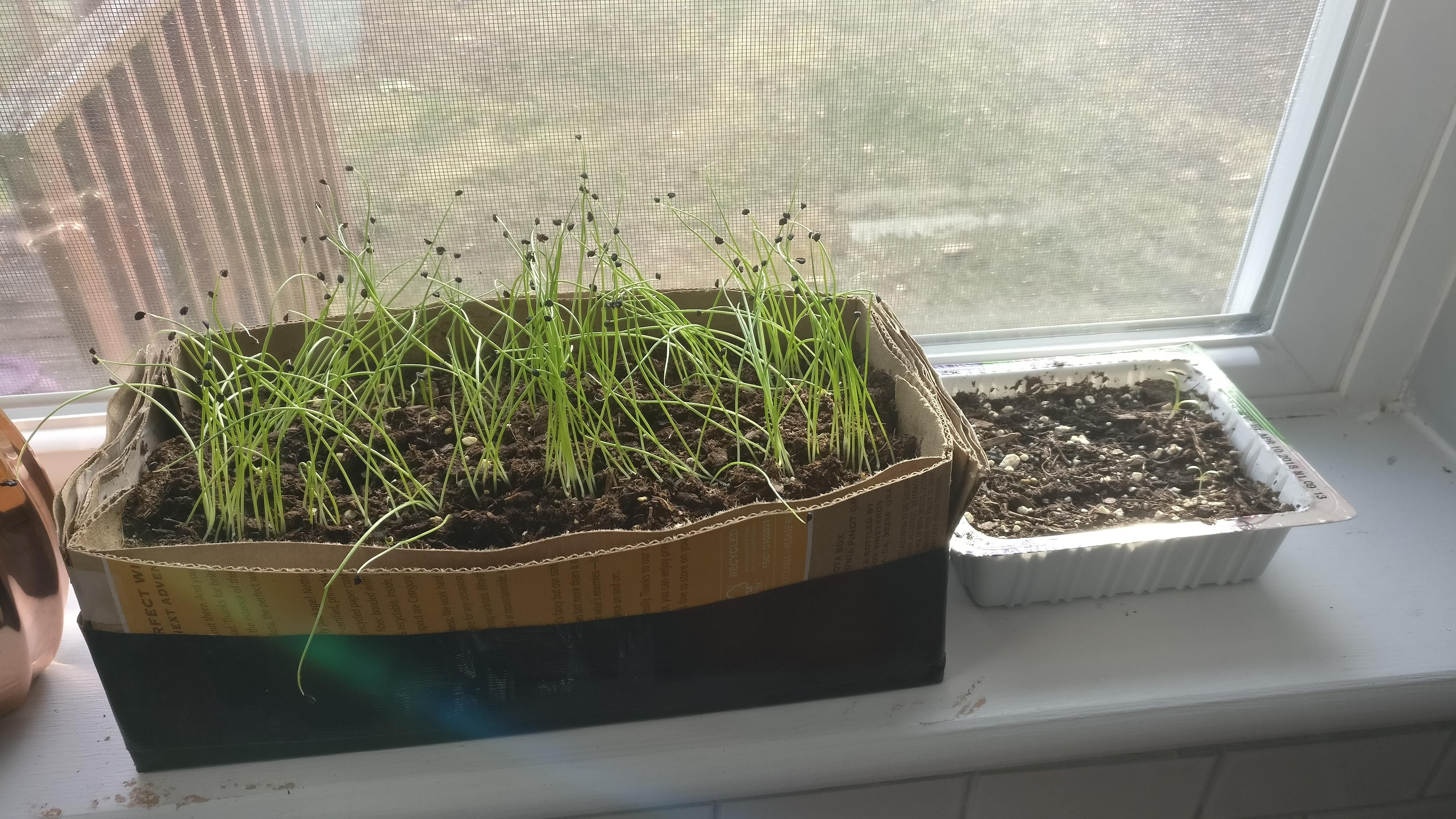 how to store green onions reddit