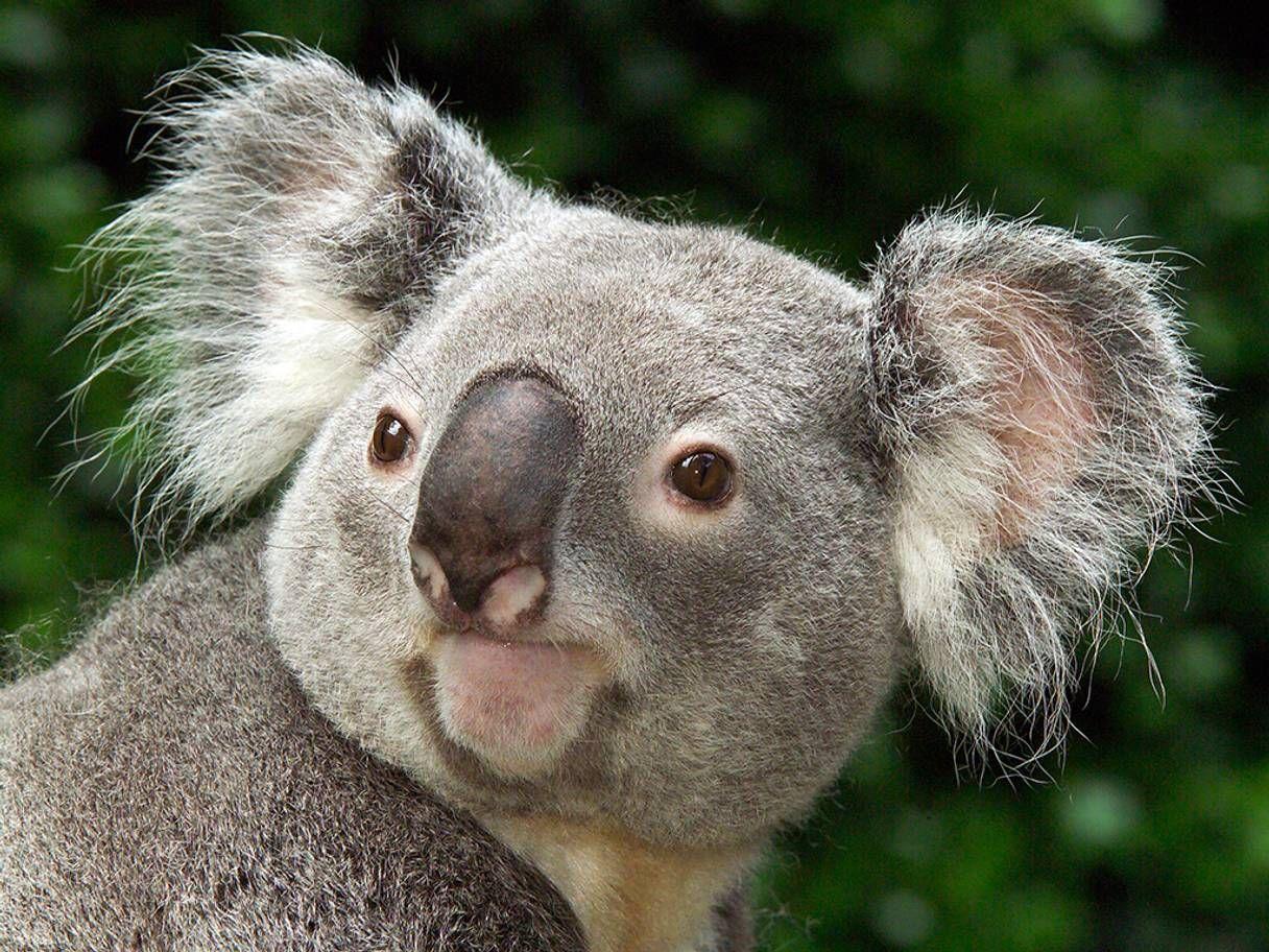 10 best zoos in the UK Edinburgh zoo, Zoo animals, Animals