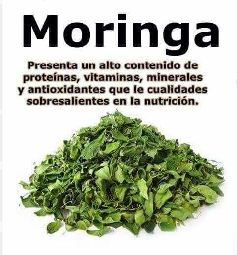 Planta Medicinal Y Sus Beneficios Fruta Y Verdura
