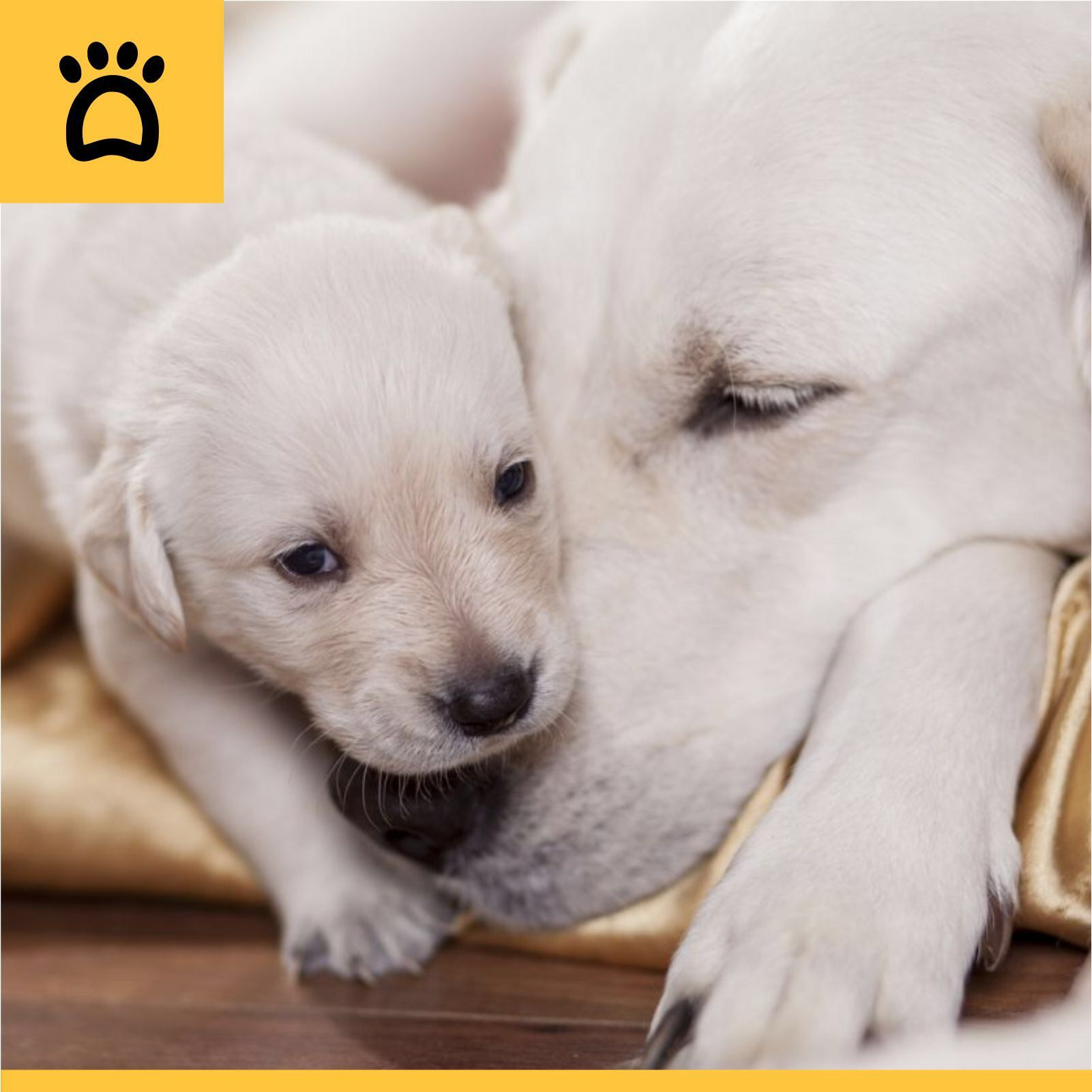 A healthy pet improves the health of the entire family and it is our job to ensure that as much as it is yours!  If you own a bitch (female dog) that is unspayed, then once she reaches maturity, she will come into heat regularly. Here's what to do when it happens:  Log on to http://www.myposhpetz.com/pet-services and get a full list of veterinarian doctors on a click.