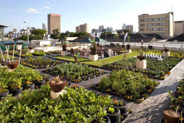 An urban gardening project greens johannesburg rooftops for Garden design johannesburg
