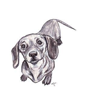 Dachshund Friendly And Curious Dachshund Drawing