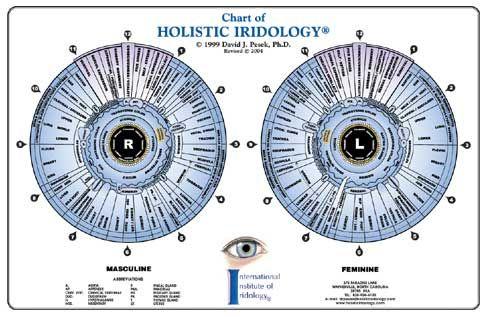 Iridology Charts Infographic Pinterest