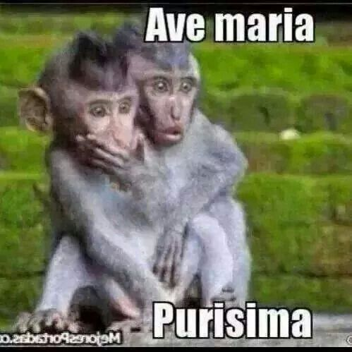 9d70d91c7dd692a6193ecd907394e56c funny memes ave maria purísima aahhhh funny pinterest