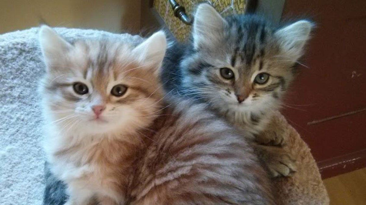 Two Cute Cats I love them • /r/aww Cute cats, Kitten for