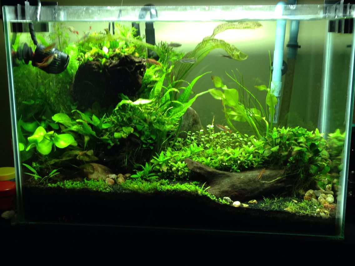 20 gallon aquascape no co2 fish tanks pinterest fish for Co2 fish tank