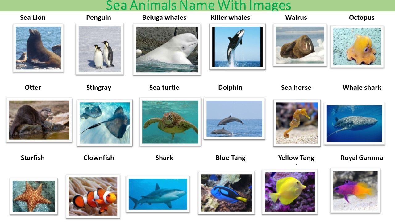 Types of Sea animals name list (With images) Animals