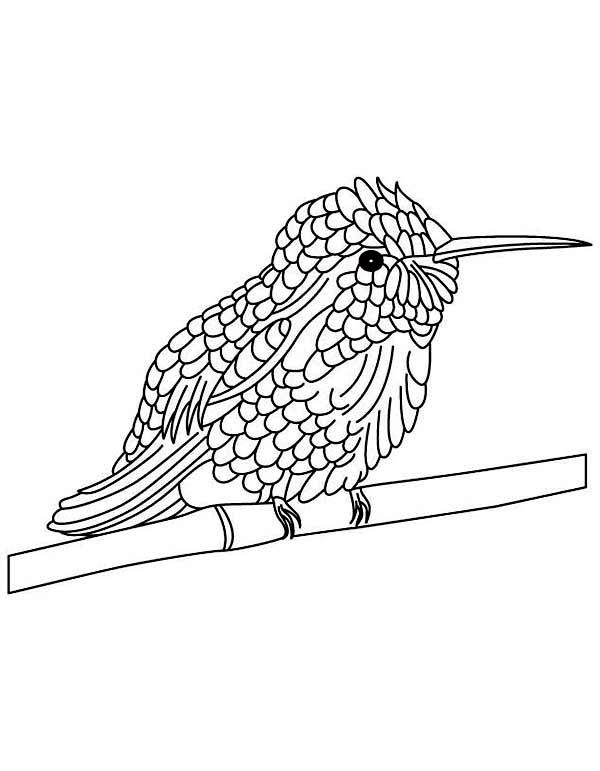 cute hummingbird perched in tree stems coloring page