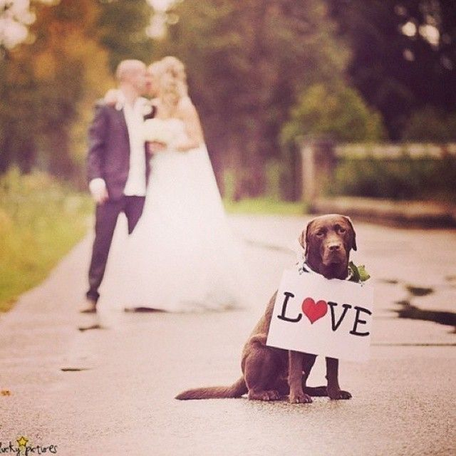Let your fluffy friend be a part of the wedding!