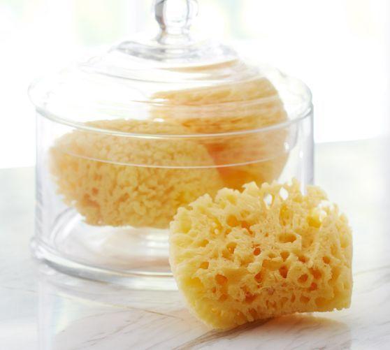 Sea Sponges, Set of 3 | Pottery Barn