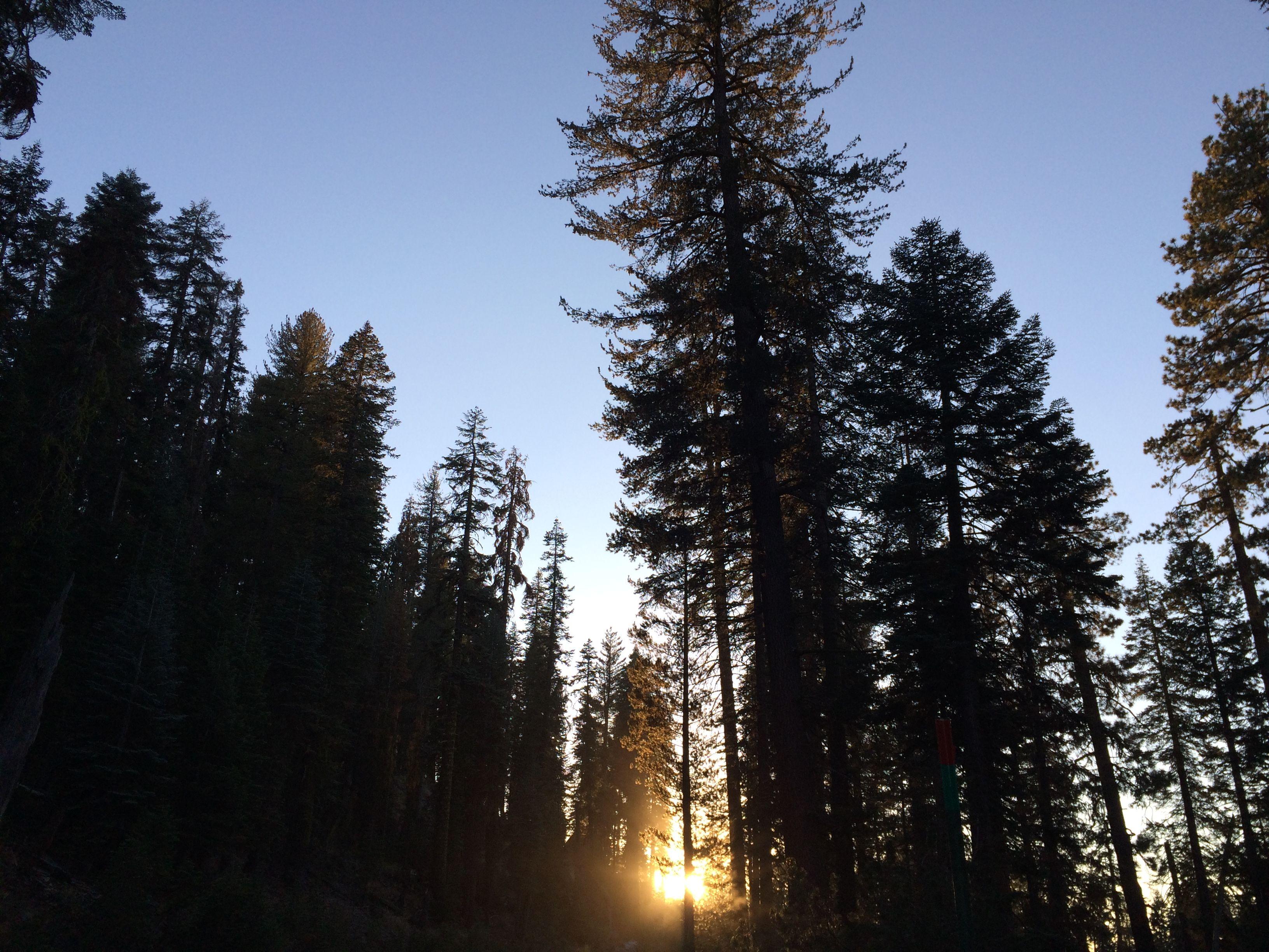 Sunset Splendor. Sierra National Forest near Wishon Reservoir, California
