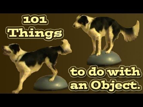 Dog Tricks 101 Things To Do With An Object Pam S Dog Academy