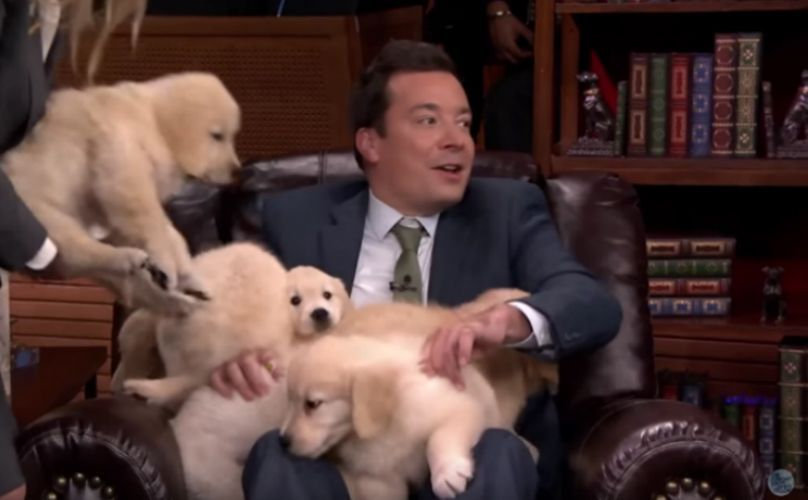 5 Times Jimmy Fallon Covered His Guests In Adorable Golden