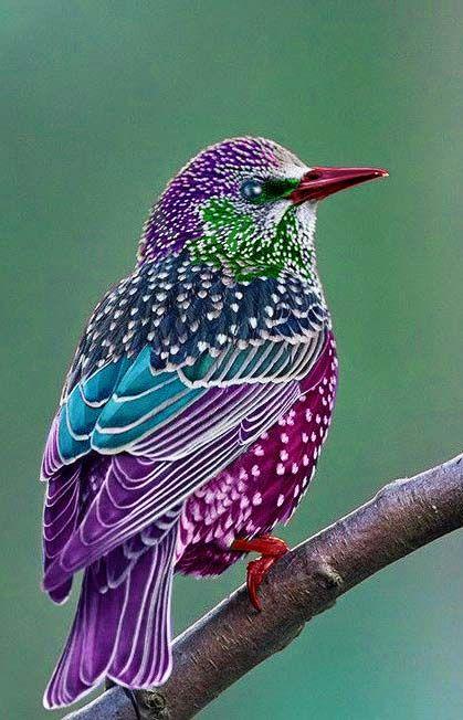 Resultado de imagen para beautiful bird