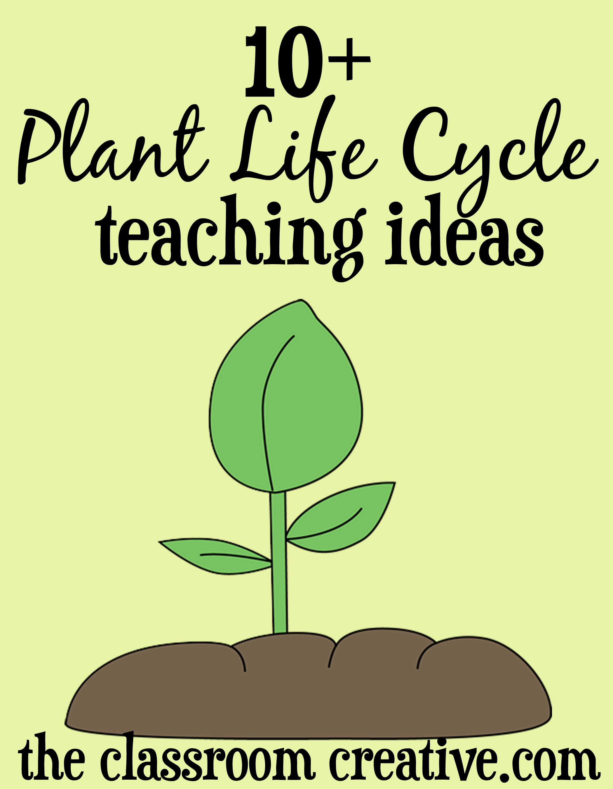 Plant Life Cycle Unit Ideas And Activities Plant Life Cycle Plant Life Cycle Worksheet Life Cycles Activities [ 2700 x 2100 Pixel ]