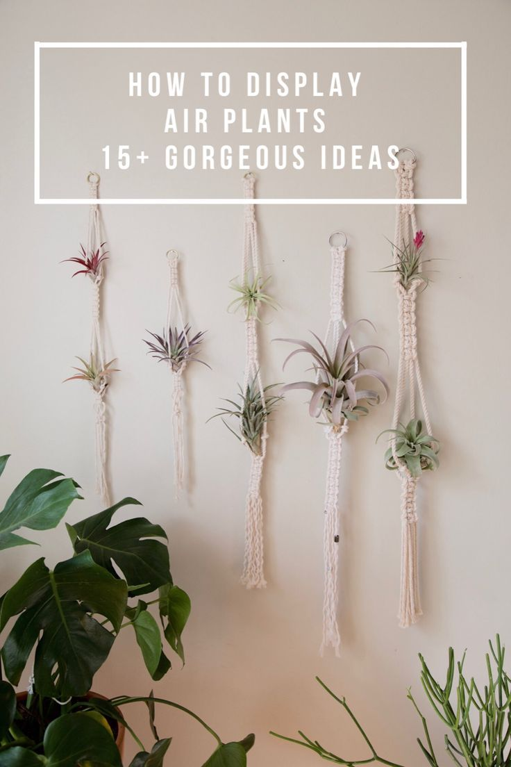 Gorgeous Air Plant Display Ideas | Plant display ideas ...