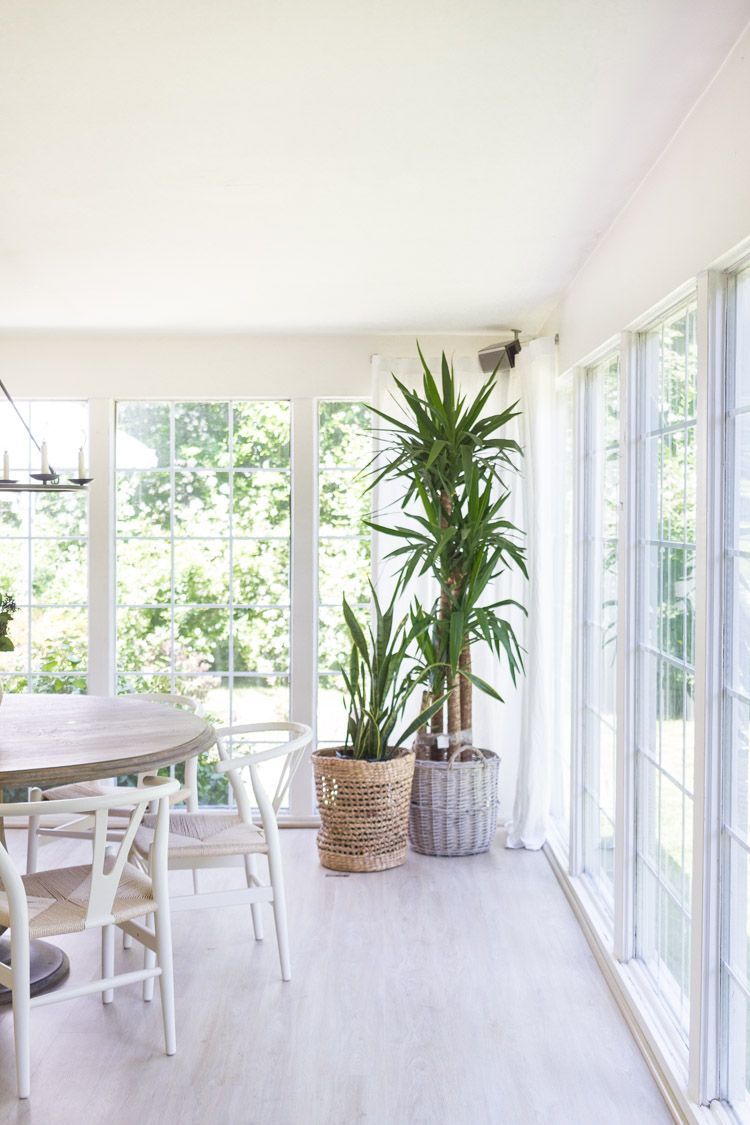 Easy Indoor Plants And Summer Living Room_ Zevy Joy In Our