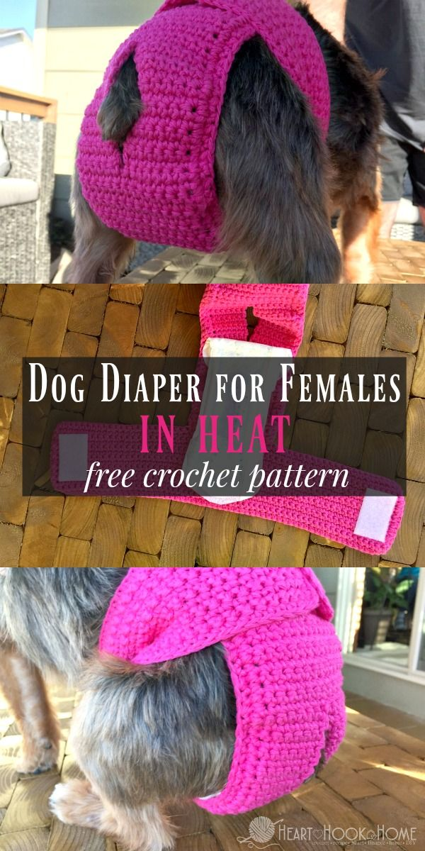 Dog Diaper for Females in Heat - Free Crochet Pattern