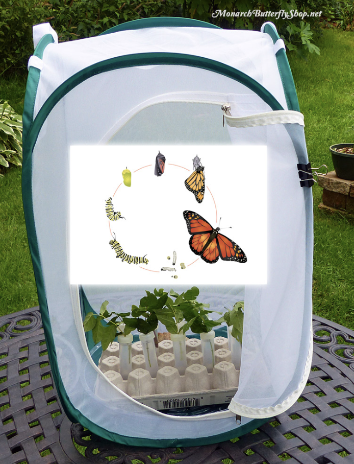 Is Your Cage Killing Future Monarch Erflies Here Are 3 Options To Help