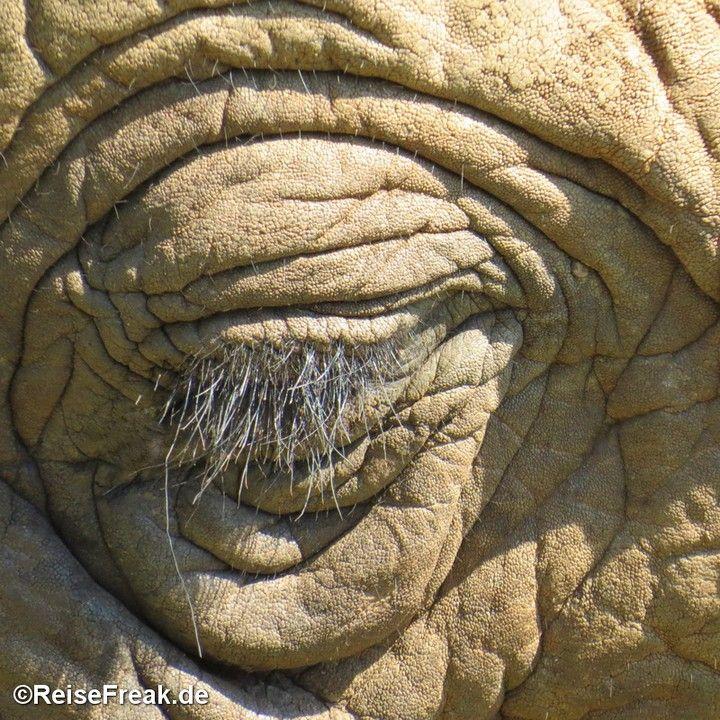 Über Instagram hier eingefügt http://ift.tt/1ZNAWt1 - Malariafreie Wildreservate in #südafrika #southafrica #malariafree #gamereserves #wb1001rb #wbesaesa @jacislodges @pilanesberg_ @south_africa_through_my_eyes @rhulani_lodge #wbpinsa #elefant #elephant